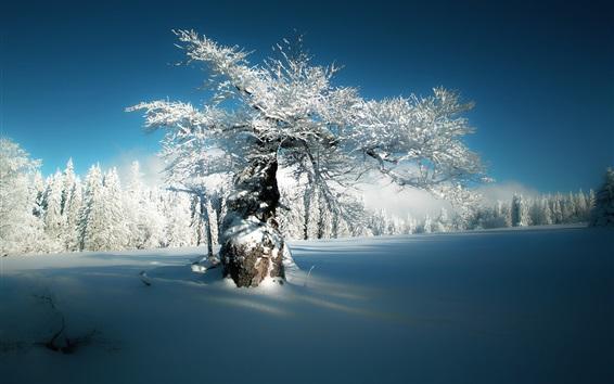Wallpaper Bayern, Hersbach, Bavaria, Germany, Deer Creek, winter, snow, trees