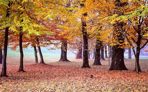 배경 화면 아름다운 가을 공원, 나무, 노란 단풍