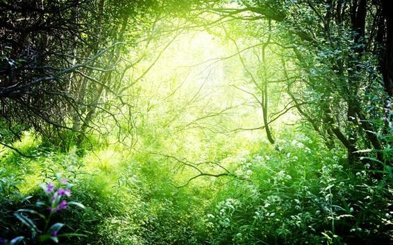 Fondos de pantalla Hermosa naturaleza, hierba, árboles, arbustos, verde, sol