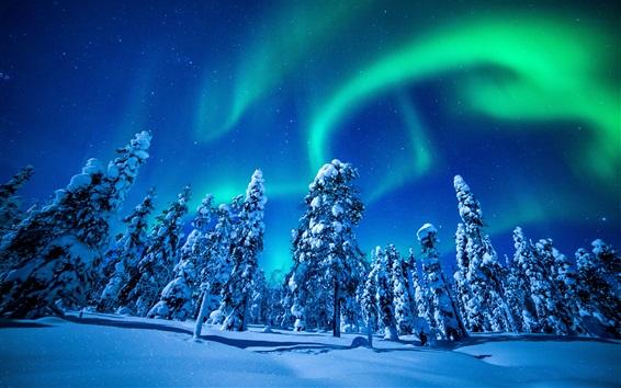 Papéis de Parede Bonito, norte, luzes, inverno, neve, abeto, árvores, noturna