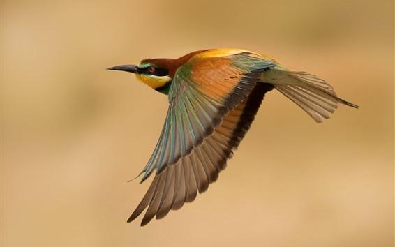 Wallpaper Bird flight, wings