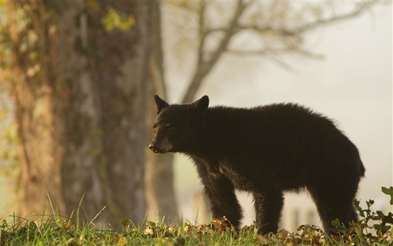 Wallpaper Black bear in grass