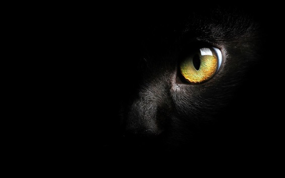 Wallpaper Black cat face, yellow eye