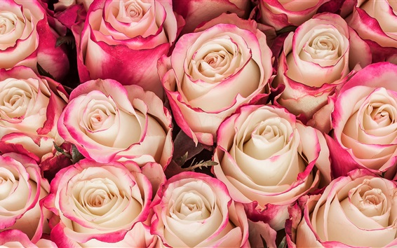 Wallpaper Bouquet, roses, pink yellow petals