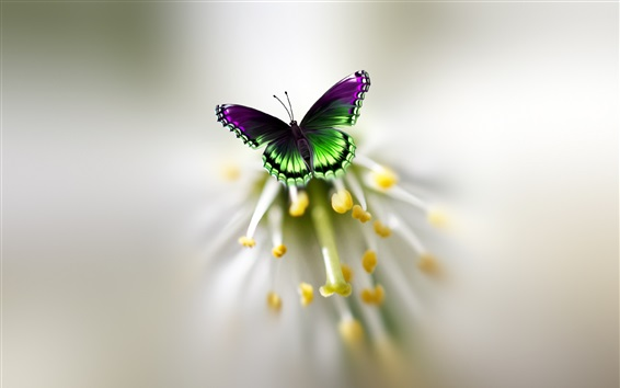Wallpaper Butterfly, wings, flower, pistil