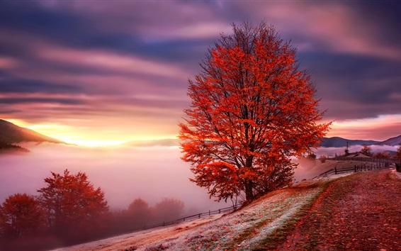 Fond d'écran Carpathians, Ukraine, aube, brouillard, montagnes, Arbres, rouge, feuilles, automne