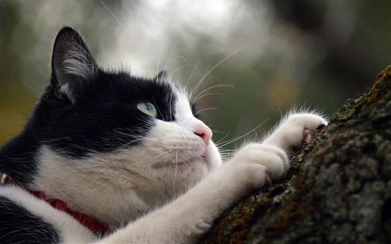 Wallpaper Cat climb tree, white and black