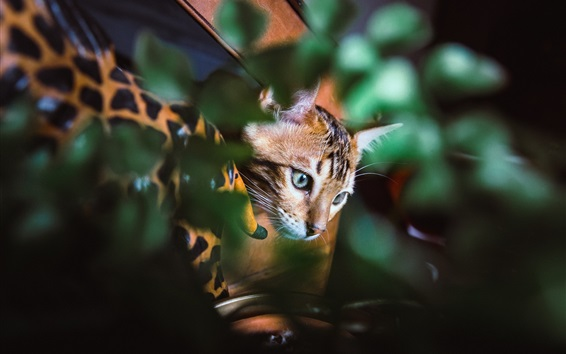 Wallpaper Cat hidden in the leaves