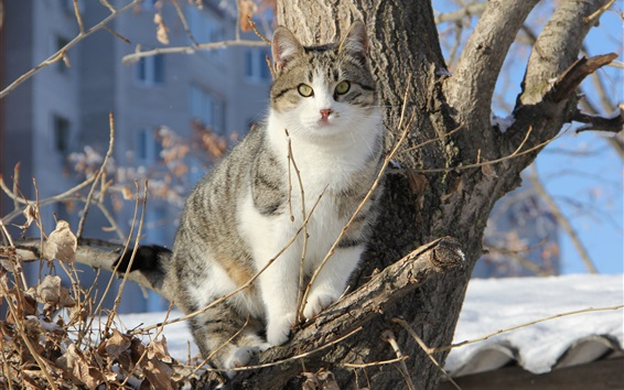 Papéis de Parede Gato na árvore, inverno, neve