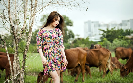 Wallpaper Colorful dress Asian girl and cows