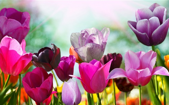 Papéis de Parede Tulipas coloridas, cores diferentes flores