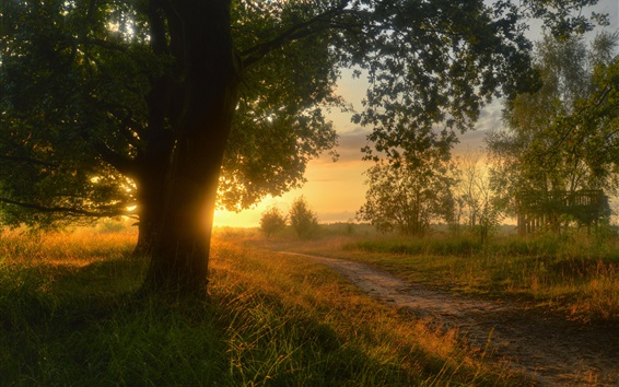 Wallpaper Countryside, Lower Saxony, Germany, trees, road, grass, sunset