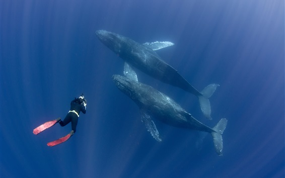 Wallpaper Diver and whales, underwater