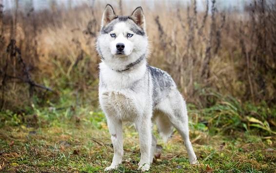 Papéis de Parede Cão na natureza a olhar