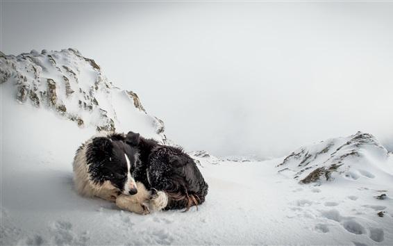 Wallpaper Dog rest in winter snow