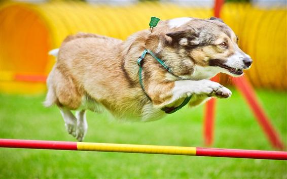 Wallpaper Dog running, jumping