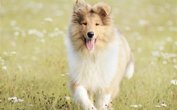 Обои Собака прогулка в траве