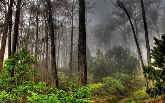 Wallpaper Fog, trees, forest, grass, nature
