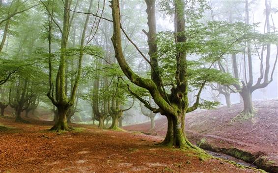 Wallpaper Forest morning, dawn, fog, trees