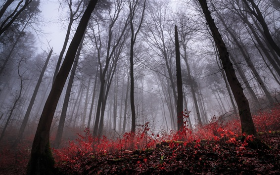 Wallpaper Forest, trees, fog, dawn, autumn