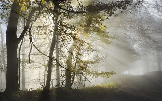 Wallpaper Forest, trees, road, morning, sunlight, fog