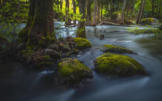 Wallpaper Forest, trees, stream, stones, moss