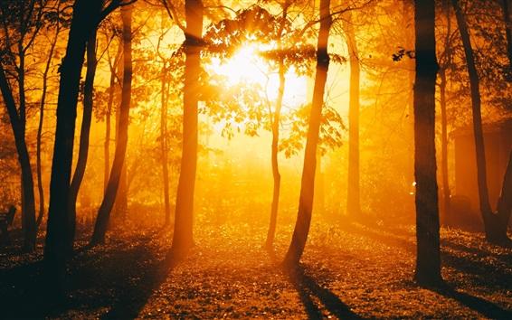 Fond d'écran Forêt, arbres, lever du soleil, soleil