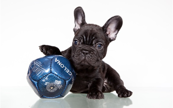 Wallpaper French bulldog, black dog, football