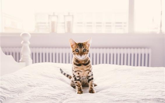 Fond d'écran Accueil animal de compagnie, chaton sur le lit