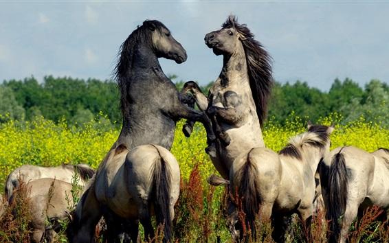Wallpaper Horses playful