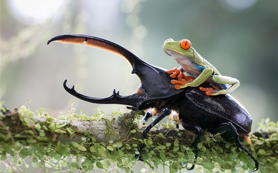 Wallpaper Insect and frog