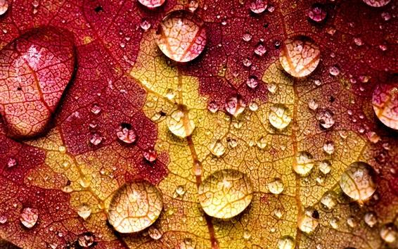 Fond d'écran Feuille, macro, photographie, veines, eau, gouttes