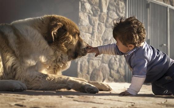 Обои Маленький мальчик с собакой