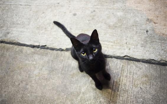 Wallpaper Lovely black kitten look at you