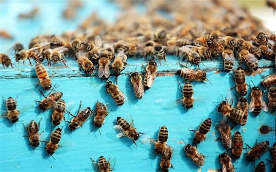 배경 화면 많은 꿀벌, 곤충, 벌집