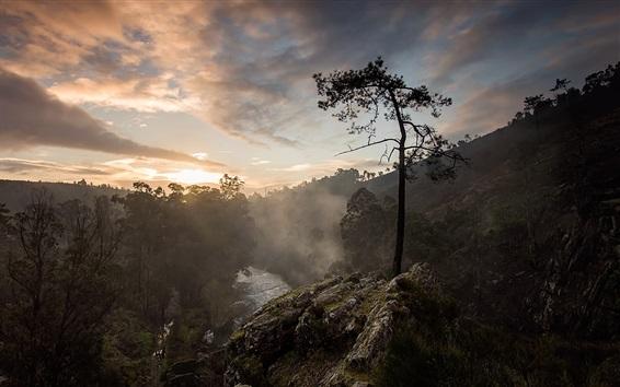 Обои Горы, одинокое дерево, камни, туман, рассвет, восход солнца
