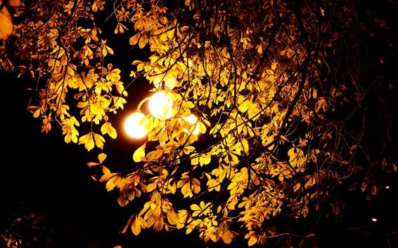 Обои Ночь, огни, осень, дерево, листья