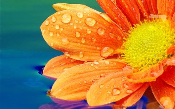 Обои Оранжевый цветок крупным планом, лепестки, роса