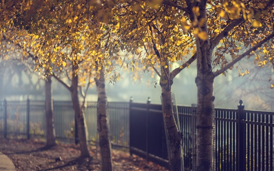 Wallpaper Park, trees, fence, autumn