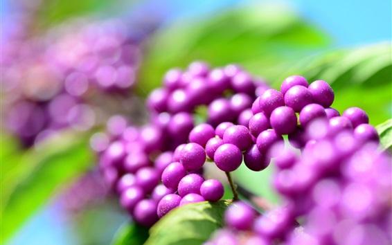 Wallpaper Purple berries, plants close-up