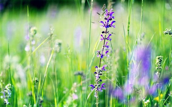 Wallpaper Purple snapdragons, grass, summer
