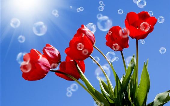 Обои Красные тюльпаны, стебли, пузыри, голубое небо