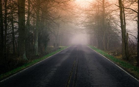 Wallpaper Road, fog, trees, morning