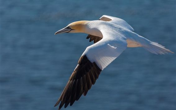 Wallpaper Seagull flight, wings, water, bird photography