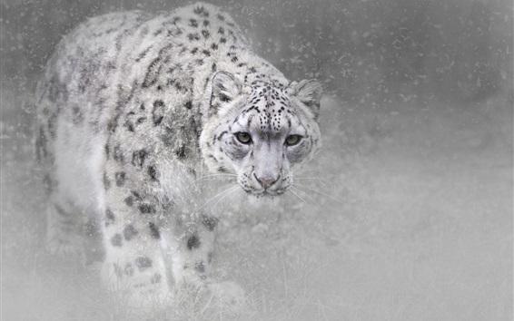 Wallpaper Snow leopard in winter, snow, fog