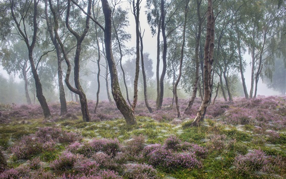 Wallpaper Summer nature, forest, trees, wildflowers, morning, fog