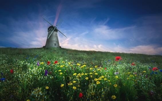 Fond d'écran Été, fleurs sauvages, moulin à vent, ciel bleu