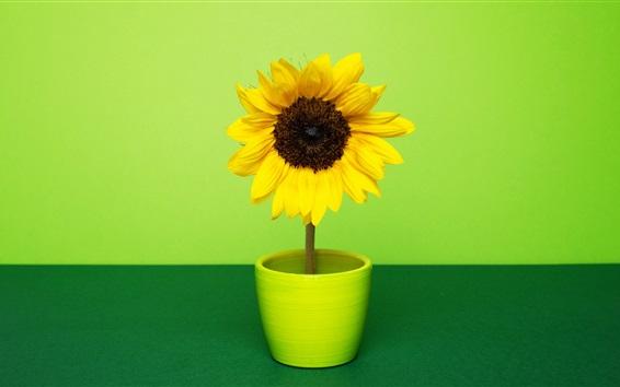 Sunflower room green m