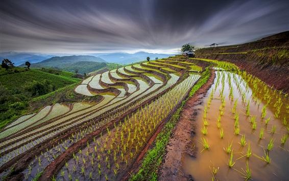 Papéis de Parede Tailândia paisagem bela paisagem, terraços de arroz