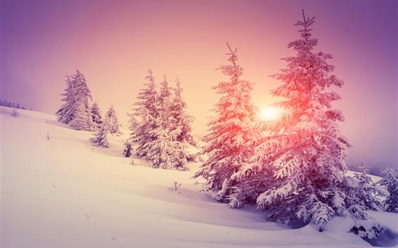 壁紙 厚い雪、冬、森、木、暖かい太陽